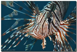 -war paint-